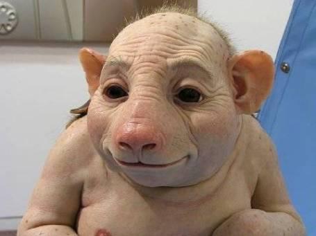 swine-human